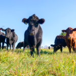 how to cook grass fed beef
